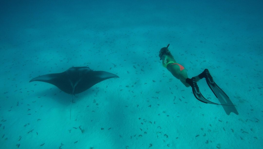 Freediving with mantas and sharks in Bora Bora, Maupiti and Maupihaa