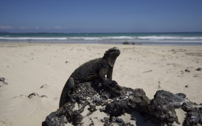 Checking in to Galapagos