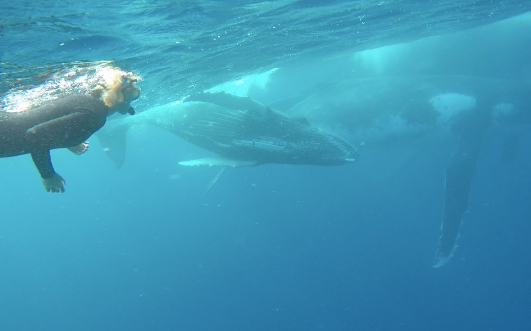We swim with whales in Tonga